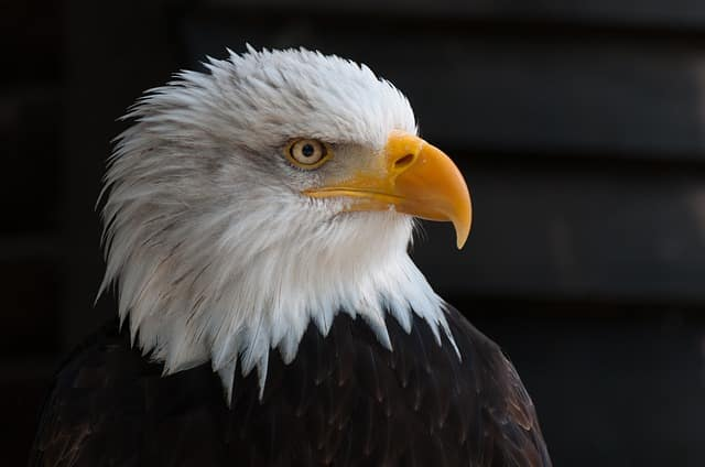 Águila Cabeza Fábula